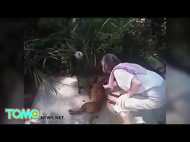 DISTURBING VIDEO, Cops Kills Small Dog For NO REASON-Happens To BE A Judges Dog
