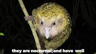Let's meet Kakapo.critically endangered species..#kakapo #educationalstatus #facts