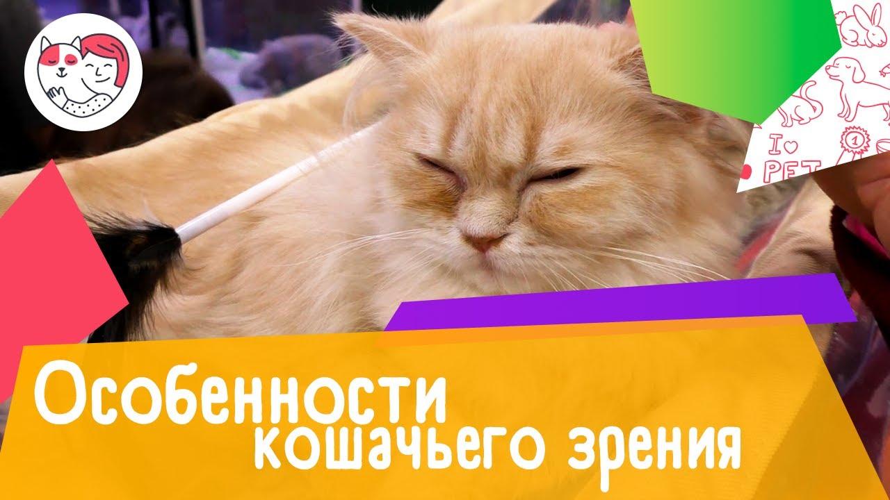 5 особенностей кошачьего зрения