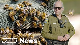 Watch A Bee-Theft Detective Bust A Hive Heist