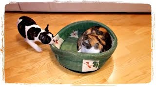 ПРИКОЛЫ С ЖИВОТНЫМИ смешные собаки и кошки | FUN WITH ANIMALS funny dogs and cats #404