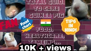 Guinea Pig Care In India Whole Guide To Care Guinea Pig In Hindi |#Exotic Pets|#Guinea Pig