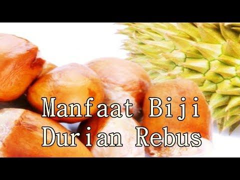 Video Manfaat Biji Durian Rebus Untuk Berbagai Kesehatan