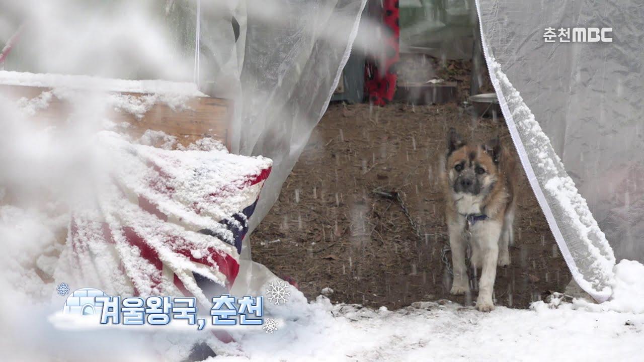 [강원365 영상]겨울왕국, 춘천_함박눈 오는 춘천