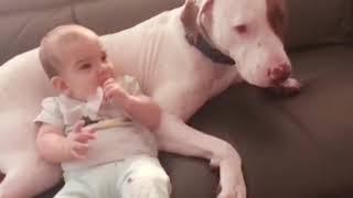 Try Not To Laugh Funny Baby and Dog 🤣 | Cute Baby Funny Moments