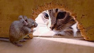 Funny Cats Vs Mouse| Tom and Jerry Real Life | Top Cats Video Compilation - Video Youtube