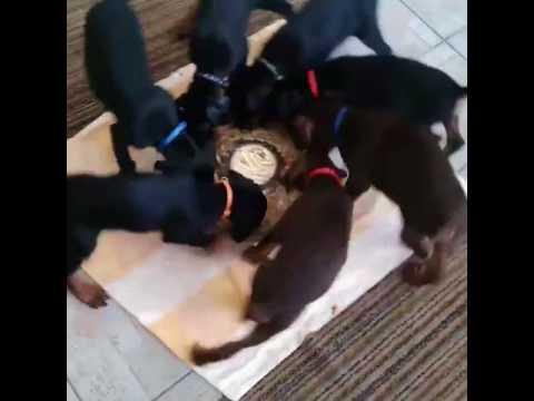 Anteprima Video Giro giro tondo...e tutti giu' per terra