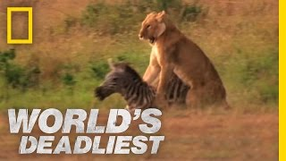 World's Deadliest - Lion's Killer Claws
