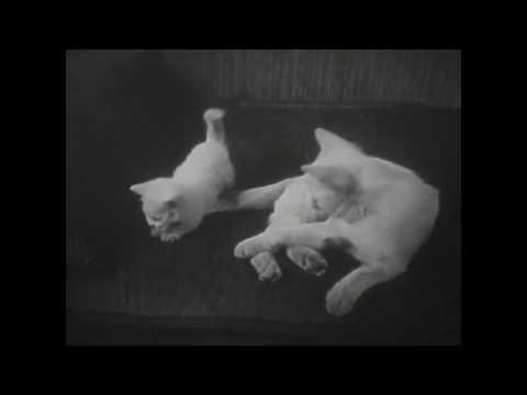 when cat meets cat