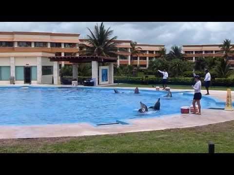 Gran Bahia Principe Dolphin Show at Dolphinaris