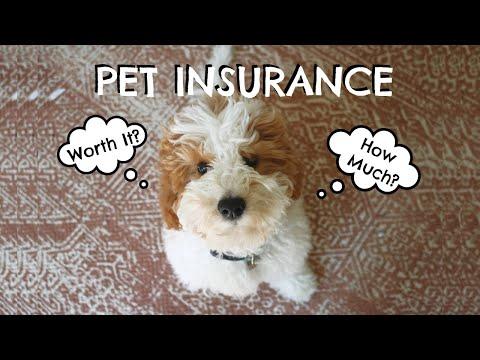 , title : 'Pet Insurance | Is It Worth It? How Does It Work?