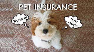 Pet Insurance | Is It Worth It? How Does It Work?