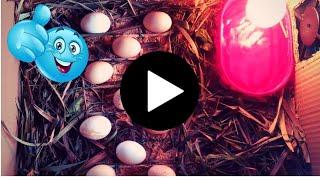 Philippine Homemade Incubator - Easy Egg Hatching!    Golden Works TV