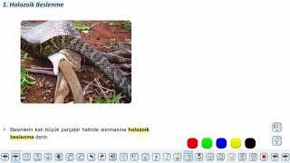 Eğitim Vadisi 10.Sınıf Biyoloji 15.Föy Canlılarda Beslenme Şekilleri Konu Anlatım Videoları