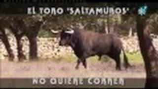 """El Toro """"Saltamuros"""", No Quiere Correr."""