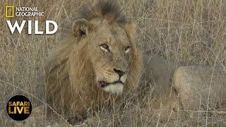 Safari Live - Day 363   Nat Geo Wild
