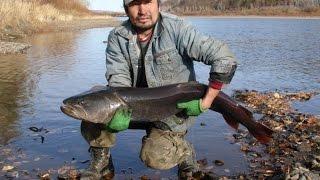 На рыбалку в монголию из горного алтая