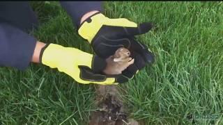 Канадец нашёл маленьких крольчат у себя во дворе