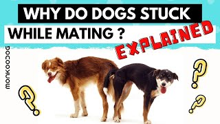 Why do dogs get stuck after mating? 3 stages of Mating explained.