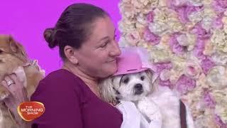 Live Dog Wedding - The Morning Show