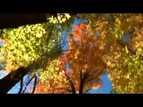 Вивальди - Осень