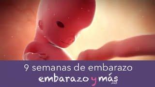 7eed7be7d 9 Semanas De Embarazo - Segundo Mes - Embarazoymas