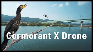 가마우지와 FPV드론의 만남(Cormorant meets FPV drone)