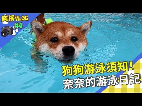 別再說狗狗天生會游泳,不用教牠們,這句是錯的!
