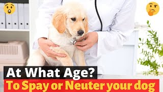 At What age should you Spay or Neuter your pet? 🤔
