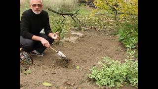 Как правильно высаживать луковичные растения