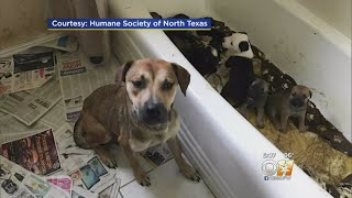 More Than 100 Animals Rescued Tuesday