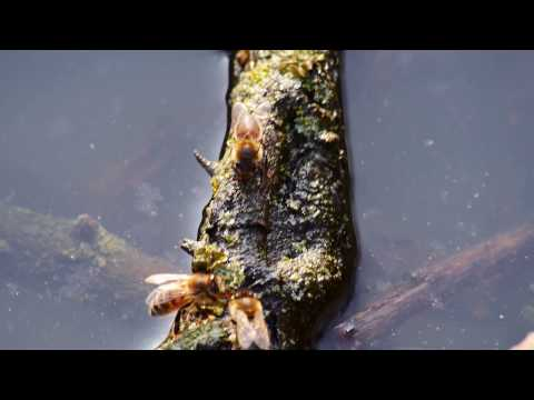 Die ätherischen Öle des Ingwers von der Zellulitis