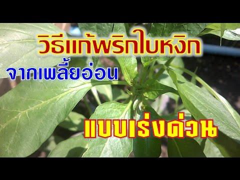 เกี่ยวกับการทำความสะอาดและปรสิต Neumyvakin i.p