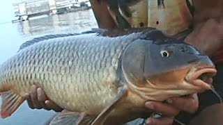 Ловля на макуху ДИКОГО САЗАНА. Рыбалка