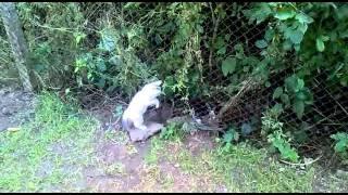 Най-смешните  видеоклипове  с  котки - Вижте Ги!