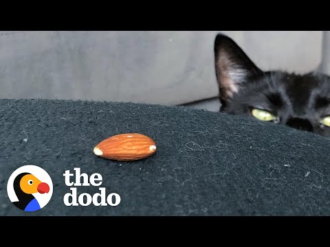Hilarious - This Strange Cat Is Obsessed With Almonds