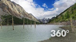 360° | озеро Маашей - Горный Алтай. Мёртвая роща