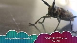 К чему снятся Тараканы видео -СОННИК - К чему снятся ТАРАКАНЫ?