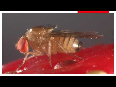 Pinworms és helminths kezelés
