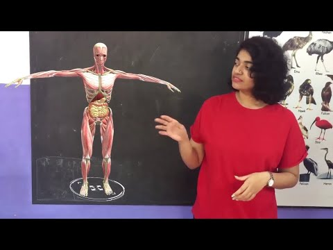 Augmented Reality for Classrooms, live augmentation for online classes - unitear.com