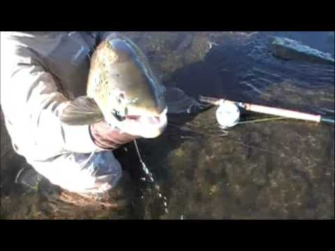 BIG BROWN SWUNG DRY FLY