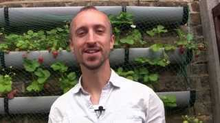 Feeding Your Plants For Free   How To Make Fertilizer For Your Vegetable Garden