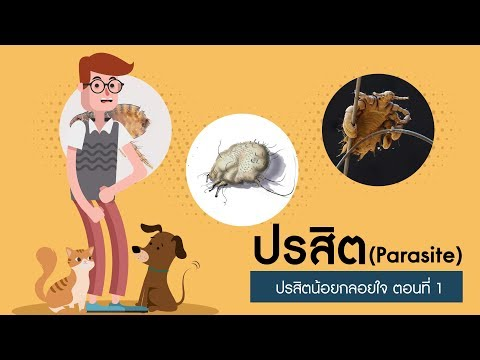 Giardia และ Toxocara