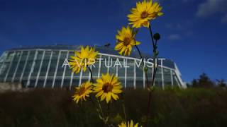 Botanical Gardens: A Virtual Visit