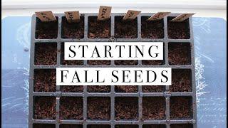 Starting My Fall Seeds | 2 Ways To Start Seeds