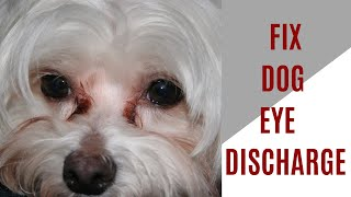 Why is dog eye discharge black