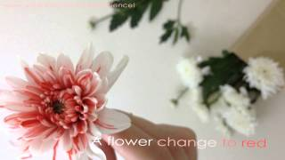 Color changing Flower - Spark Science Homemade