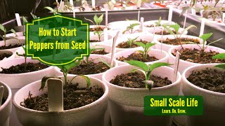 Gardening 101: How to Start Peppers from Seed