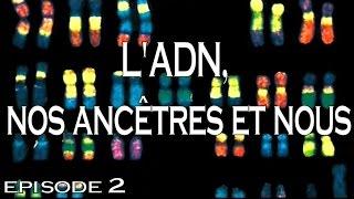 L'ADN, nos ancêtres et nous