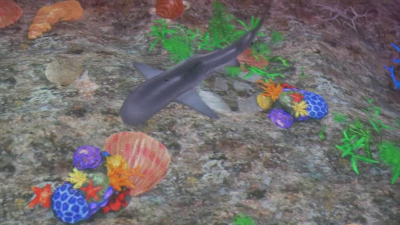 Coral reef (Shark)